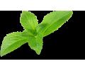 Microdosis Stevia